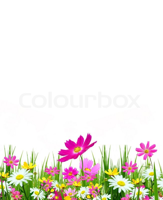 Spring flowers and grass on a white background stock photo colourbox mightylinksfo