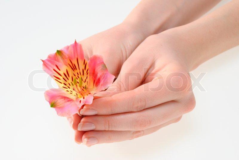 Фото рука держит цветы