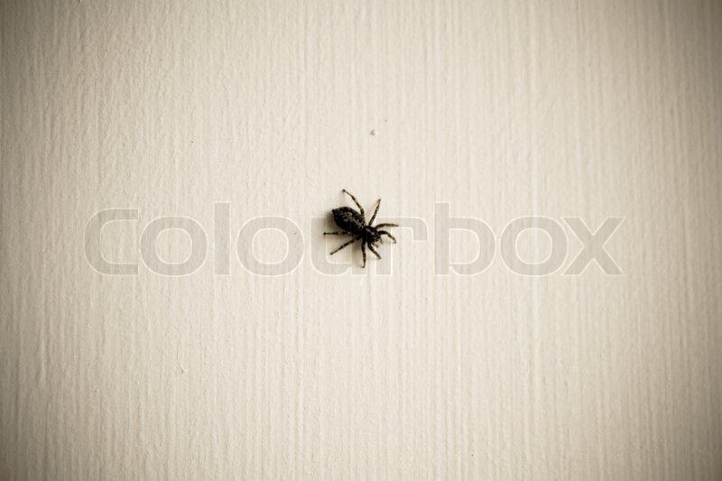schwarz wei foto von einer spinne an der wand stockfoto colourbox. Black Bedroom Furniture Sets. Home Design Ideas