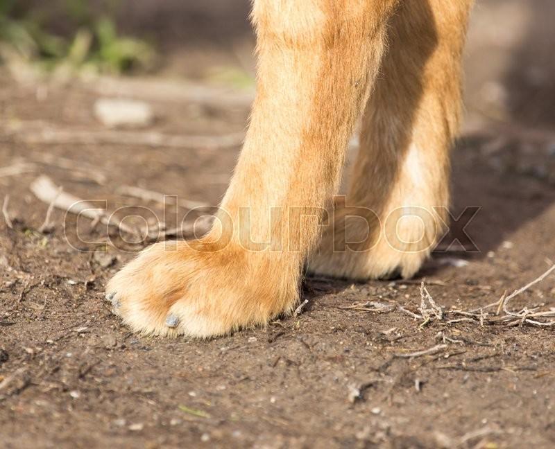 Paw dog on the nature, stock photo