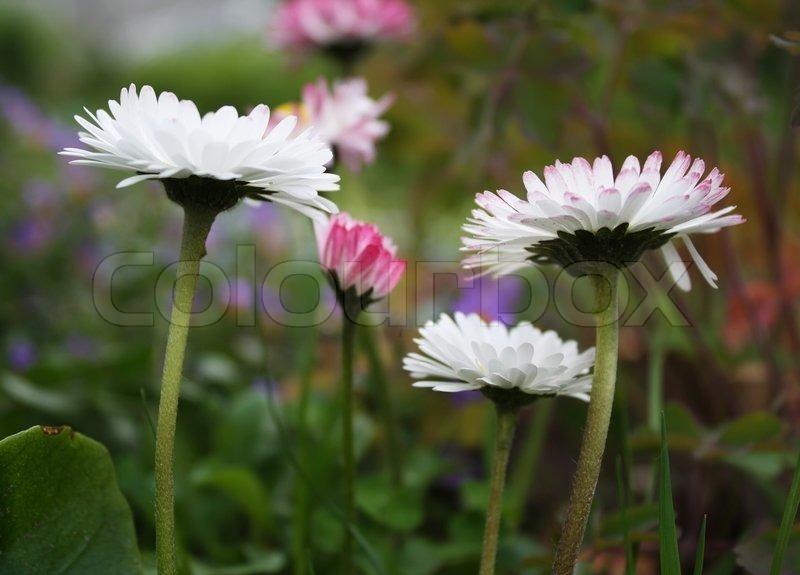 Erste Fruhlingsblumen Auf Der Wiese Stockfoto Colourbox