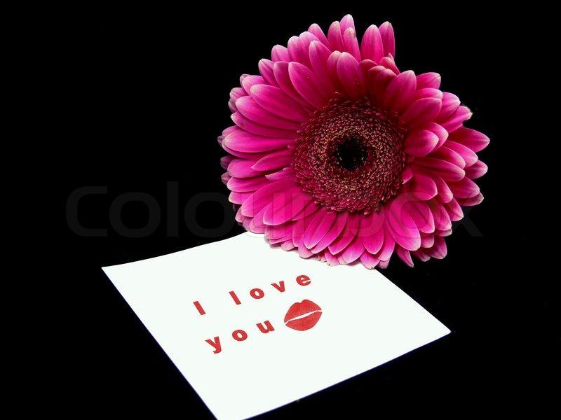 ich liebe dich auf einen zettel und einen rosa blume. Black Bedroom Furniture Sets. Home Design Ideas