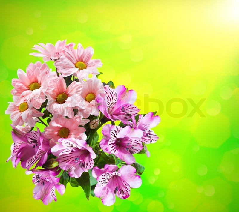 Bright flower bouquet on the color background | Stock Photo | Colourbox