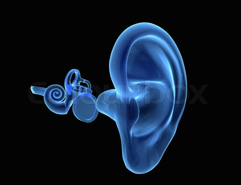 Ear diagram 3d search for wiring diagrams 3d illustration of ear anatomy with eardrum malleus incus and rh colourbox com ear diagram test ear diagram game ccuart Image collections