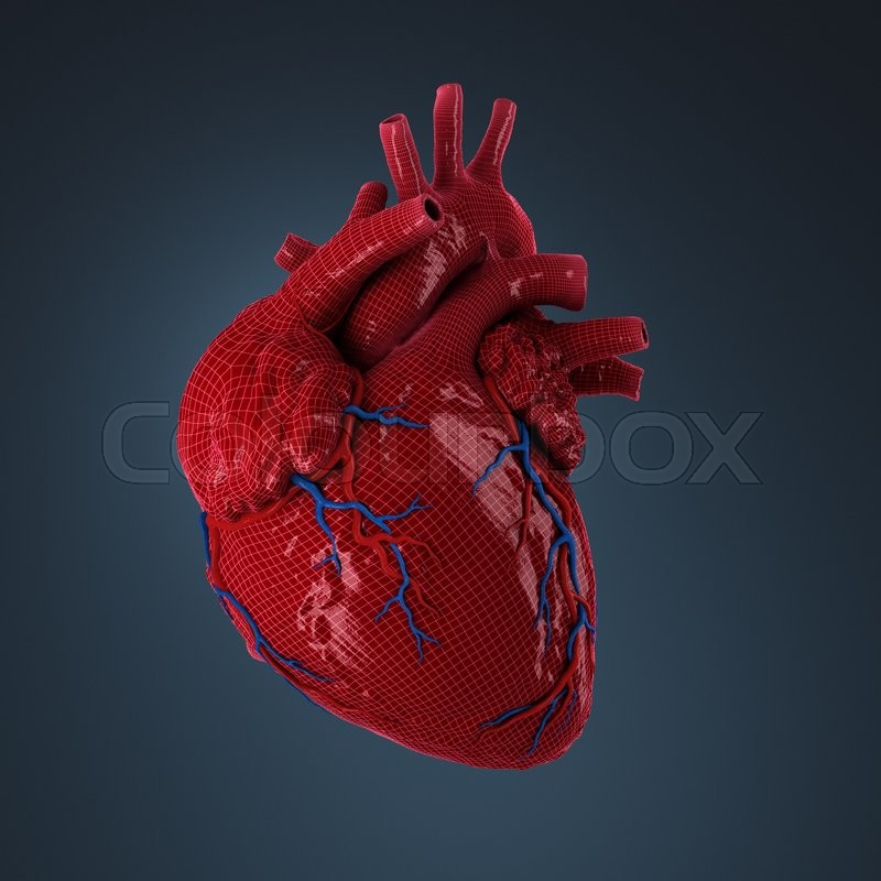 Blut, anatomie, aorta | Stockfoto | Colourbox