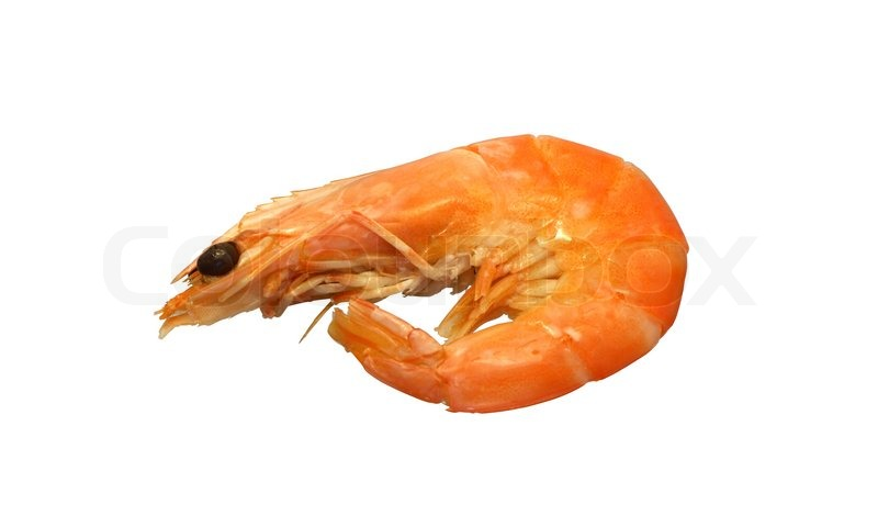 Supplier Shrimp Mail: One Cooked Shrimp Isolated On White Background With