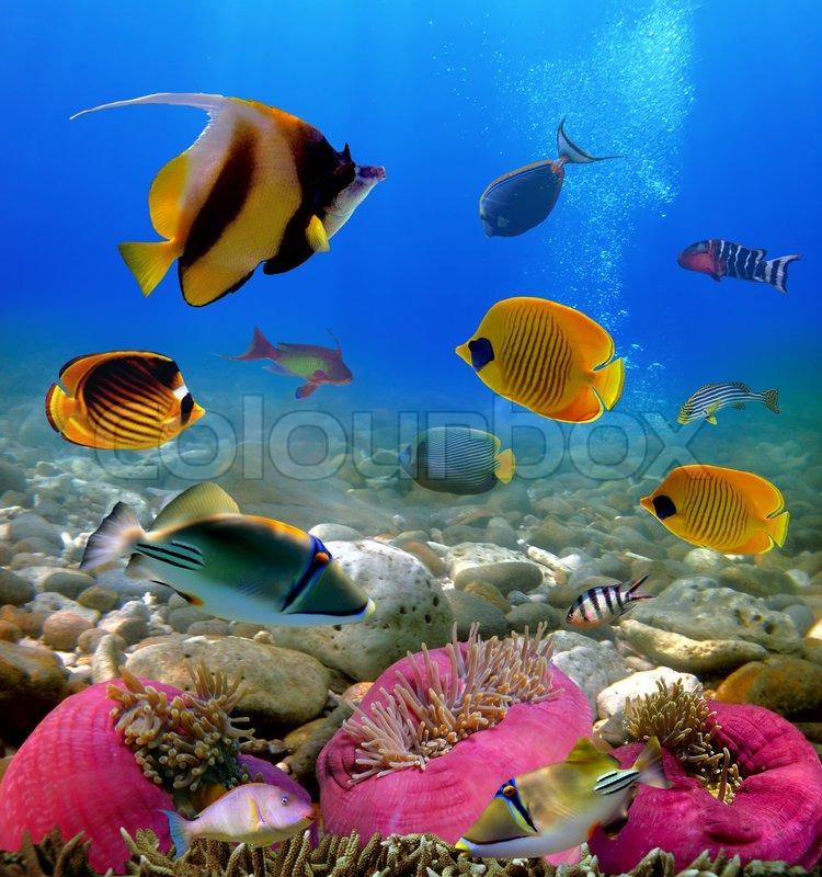 exotische fische unterwasser welt und   stock bild