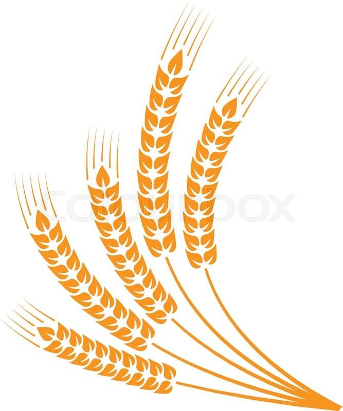 sheaf of wheat - Google Search | Art, Free vector art, Wheat design