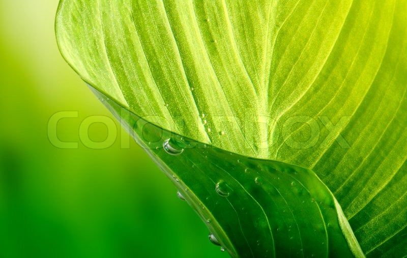 Stock image of \'rain, raindrop, plant\'