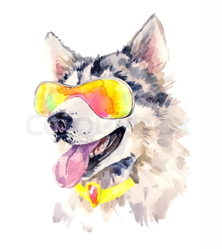 Watercolor siberian husky dog in cool sun glasses. Cute sheepdog on ...