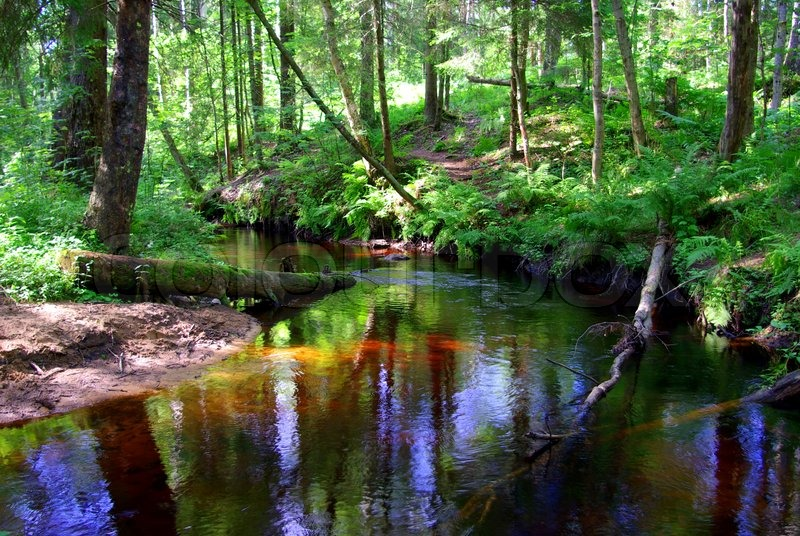 The logs fallen over the forest stream | Stock image | Colourbox