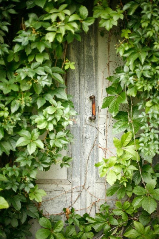 Old Mysterious Shabby Door Braided With Vine Stock Photo