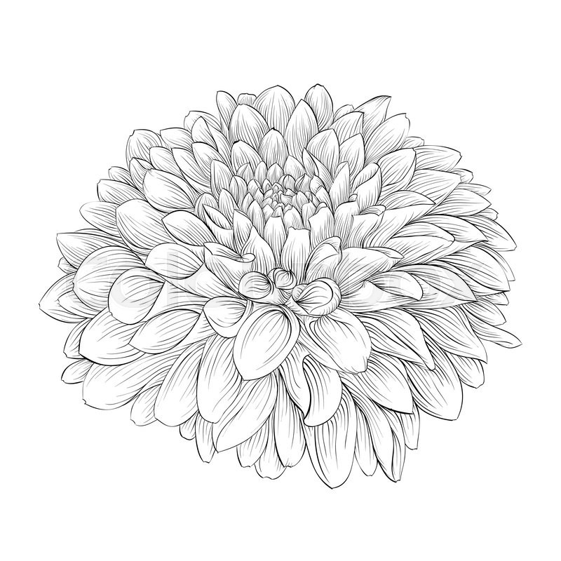 Nemo Fish Coloring Pages likewise Captain Americacivil War Printable furthermore Realistic Coloring Pages Of Horses besides Beautiful Monochrome Black And White Dahlia Flower Isolated On Background Vector 17474915 together with Vintage Teapot Set. on coloring pages for mothers day cards