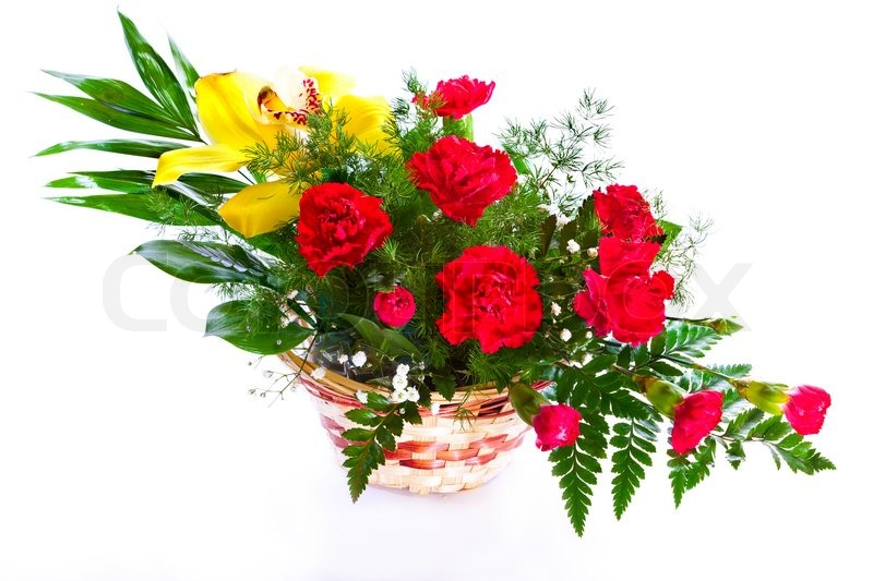 White Background Flower Images Gallery - Flower Decoration Ideas