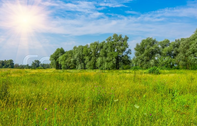 Stock image of 'green grass and trees in a wild pitch'
