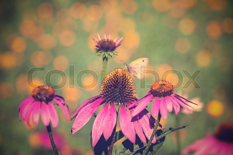 Stock image of 'Pink flowers with a butterfly on a green meadow.'