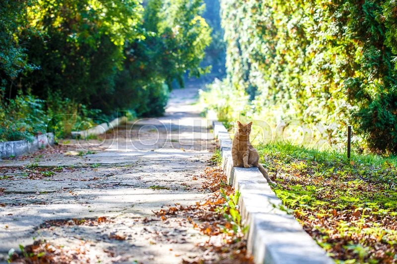 Stock image of 'red cat park path outside'