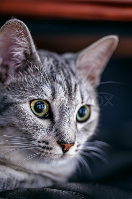Stock image of 'portrait of a cat dark background'