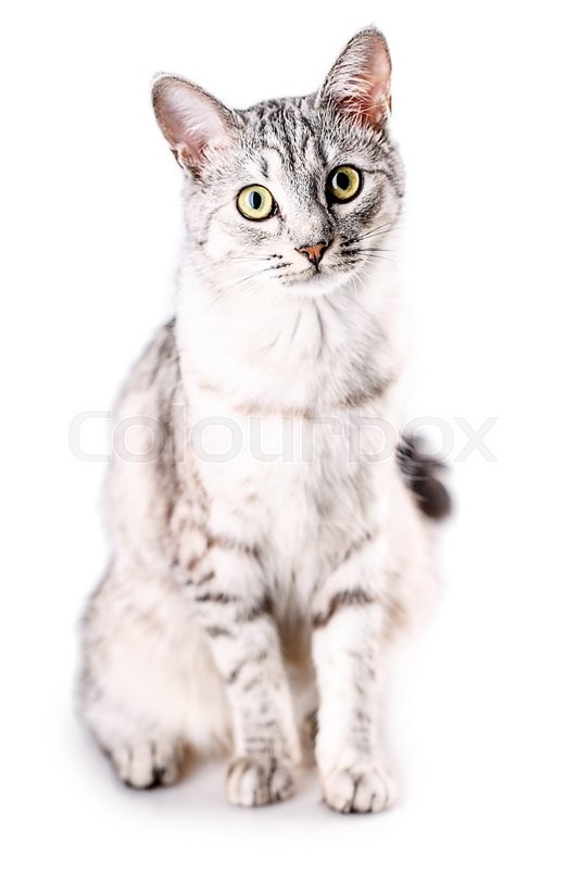Stock image of 'Cat isolated on a white background'