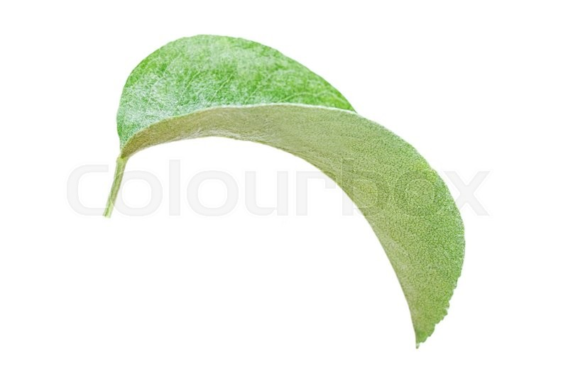 Stock image of 'leaf apple Isolated on white background'