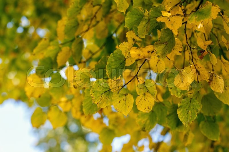 Stock image of 'tree dry leaves nature landscape nature'
