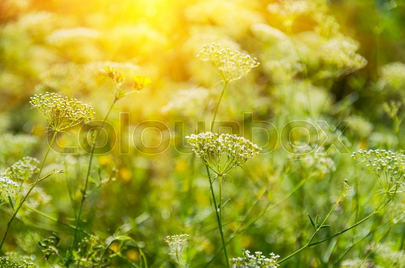 Stock image of 'Green wild grass in the spring and summer'
