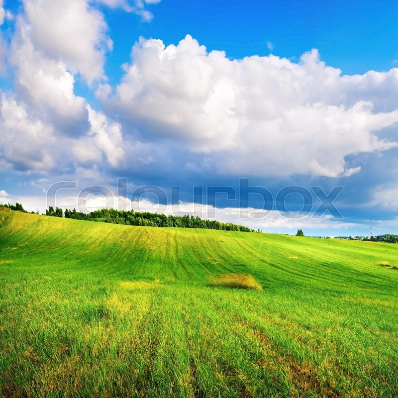 Stock image of 'Landscape with bright green grass and cumulus clouds. Sunny summer day.'