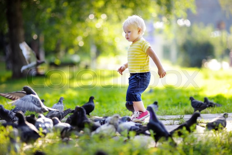 Stock image of 'Toddler boy walking in the park and feeding pigeons at the summer day'