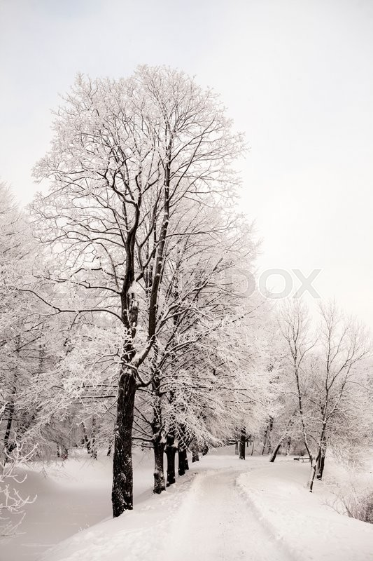 Stock image of 'Beautiful views of Canadian winter forest in the snow at sunset frosty days. Trees covered in frost and snow.'