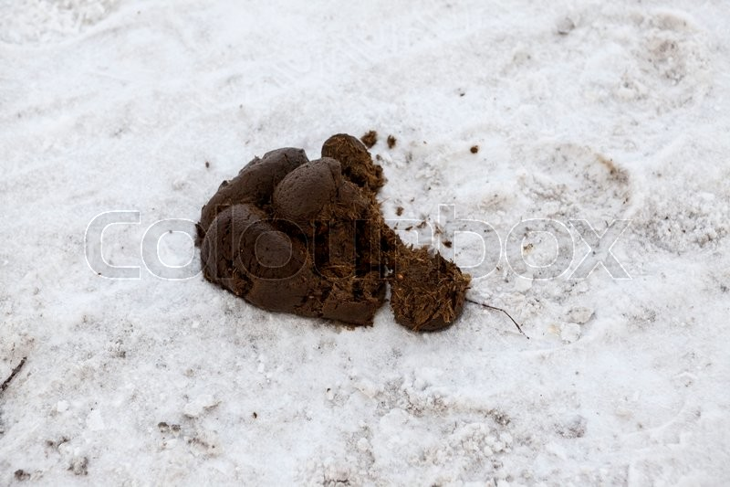 Horse shit on the road in the snow in the Park, stock photo