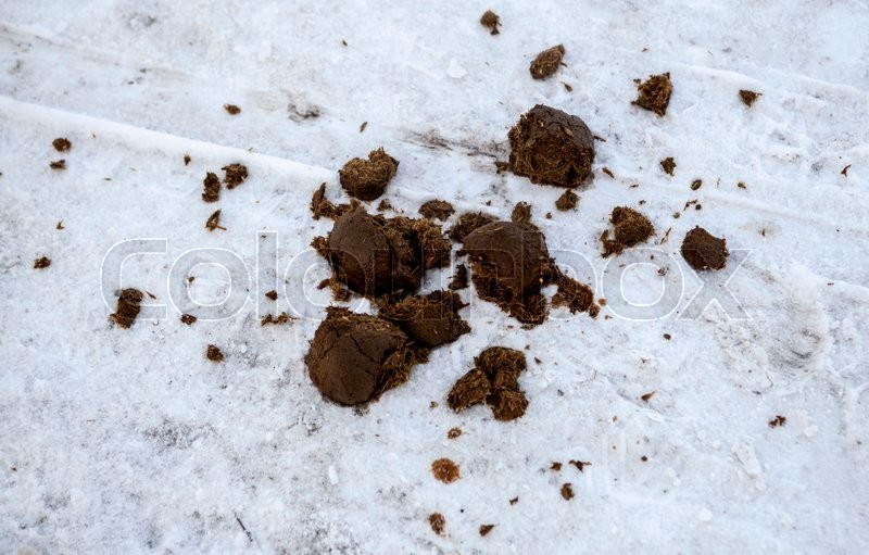 Stock image of 'Horse shit on the road in the snow in the Park.'