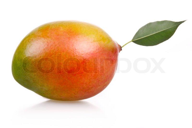 Mango Property Management