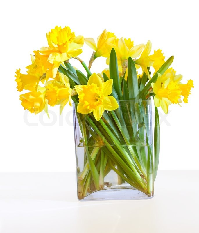 A Bouquet Of Beautiful Daffodils In A Glass Vase Isolated