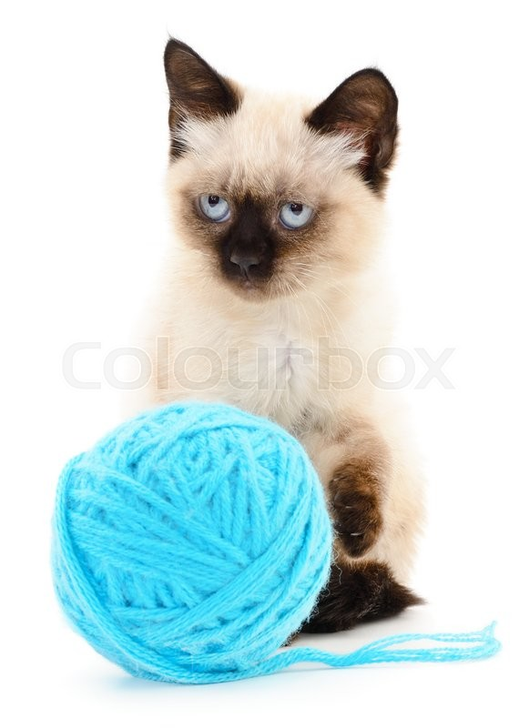 Stock image of 'Small funny kitten and clew of thread . Isolated on white background'