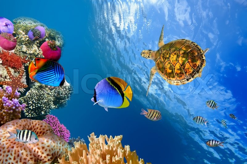 tropical fish wallpapers widescreen
