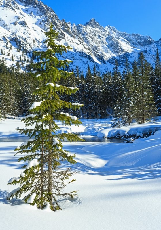 Stock image of 'Small mountain stream with fir forest on winter snowy rocky slope.'