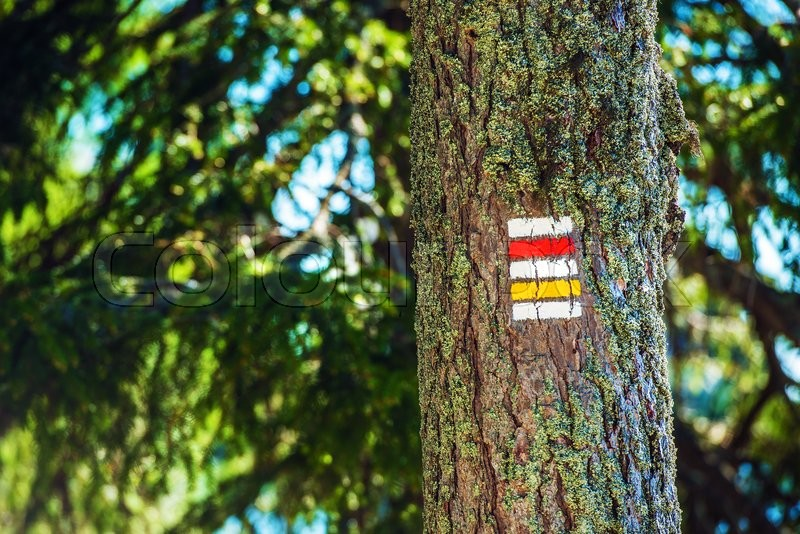 Stock image of 'Painted Trail Tree Sign. On the Forest Trail. '
