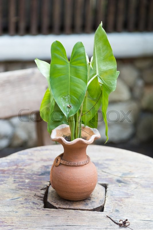 Stock image of 'Pottery Vase tree Placed on a wooden table in the garden at home.'
