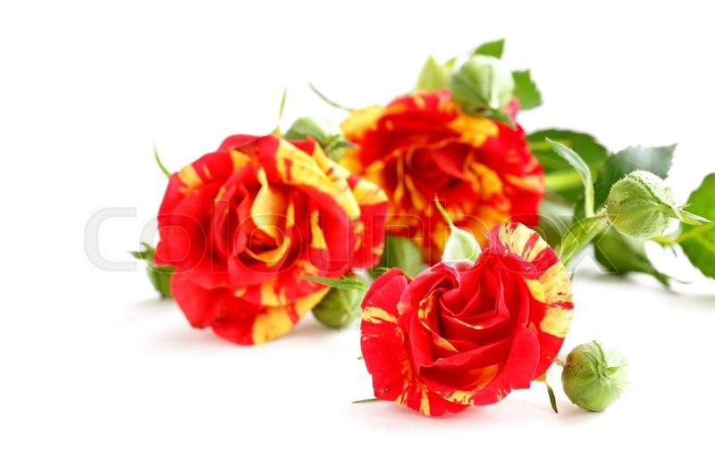 Stock image of 'bouquet of red roses on a white background'