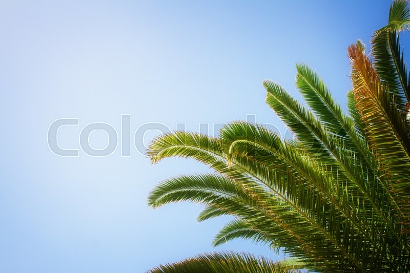 Stock image of 'palm tree leaves in blue sky, instagram retro toned'