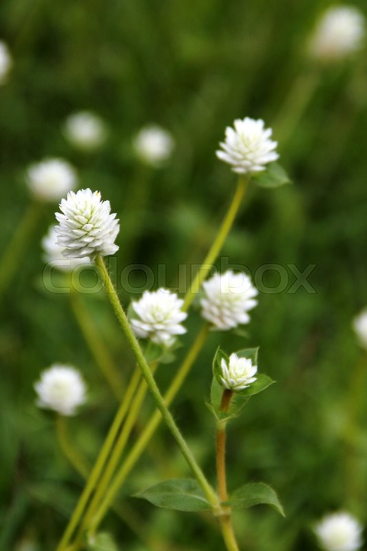 Stock image of 'white flower in the big backyard. Natural Concept.'
