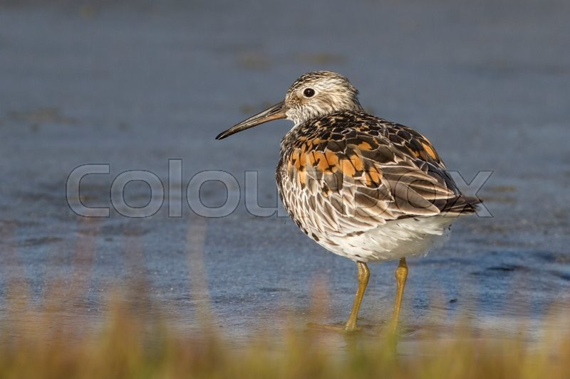 Stock image of 'Great knot It stands on the bank of the little lake on a sunny day'