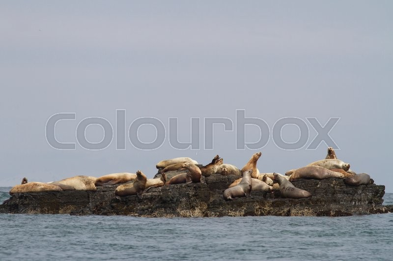 Stock image of 'Steller sea lion rookery on cliffs of the island in the Pacific Ocean'