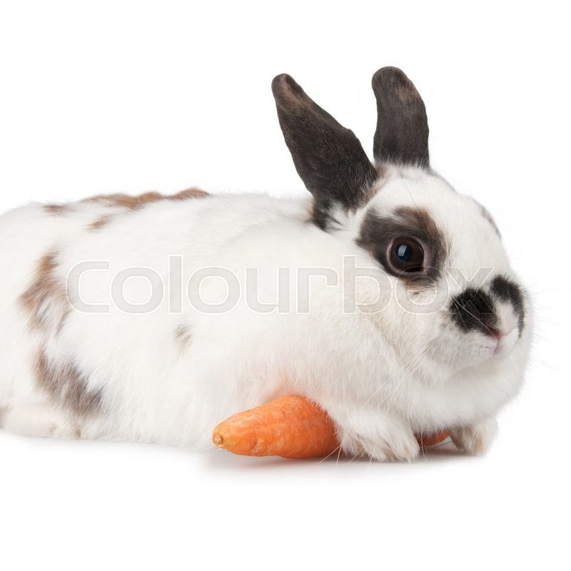 Stock image of 'white rabbit with blask spots'