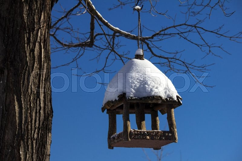 Stock image of 'Birdhouse Hanging From A Tree'