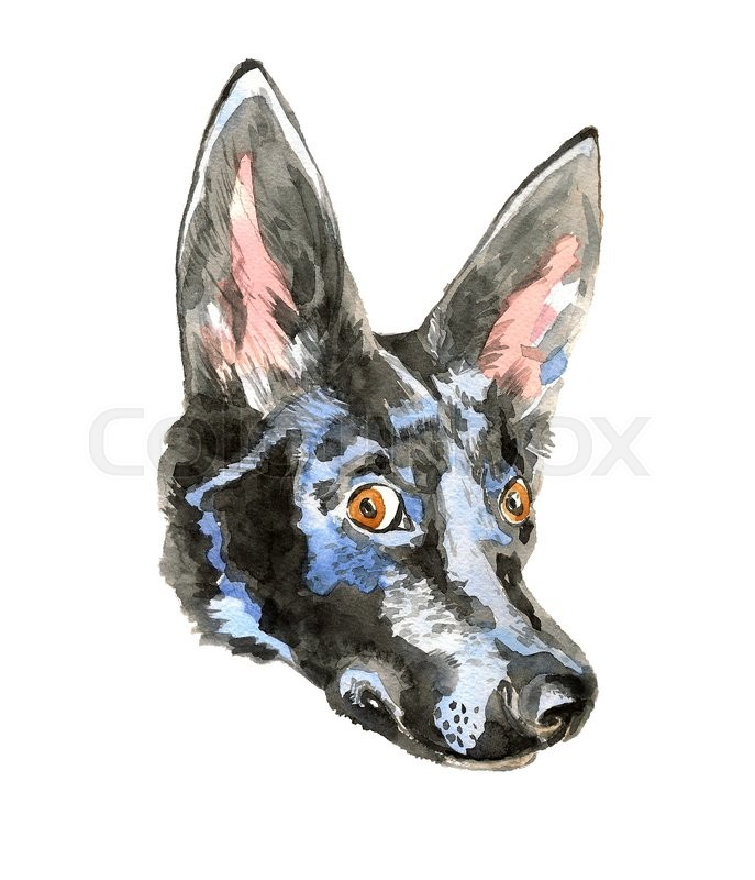Stock image of 'Portrait of cheerful watercolor dog isolated on white background. Doberman puppy with cute long ears. Can be used for posters, invitation and greeting cards, t-shirts. Clip art illustration'