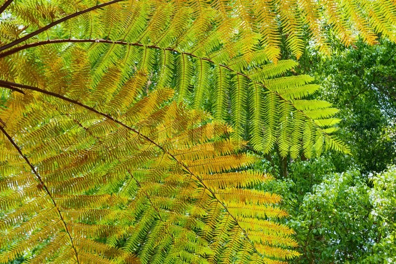 Stock image of 'Beautiful pattern of great green, yellow and orange transparent textured leaves on tree fern branches in the tropical jungle. Environment, rainforest ecology, recovery and abstract natural backgrounds'