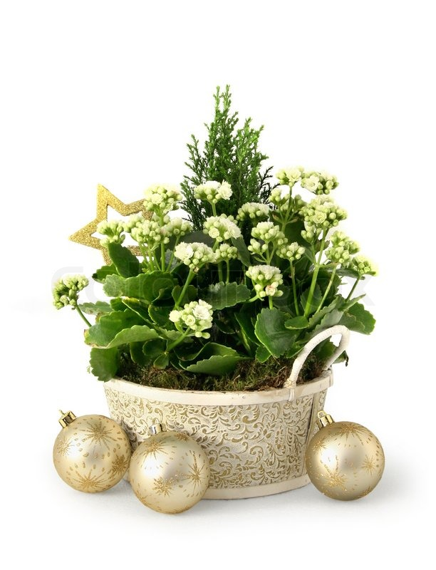 weihnachten blumenschmuck setup in gr n gold und wei stockfoto colourbox. Black Bedroom Furniture Sets. Home Design Ideas