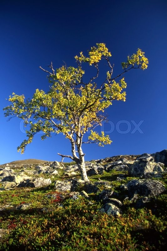 Stock image of 'A lonely tree on the top of mountain in sunny day'