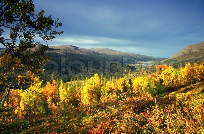 Stock image of 'Beautiful autumn Landscape in mountian ,Yellow leaves and sunshine'